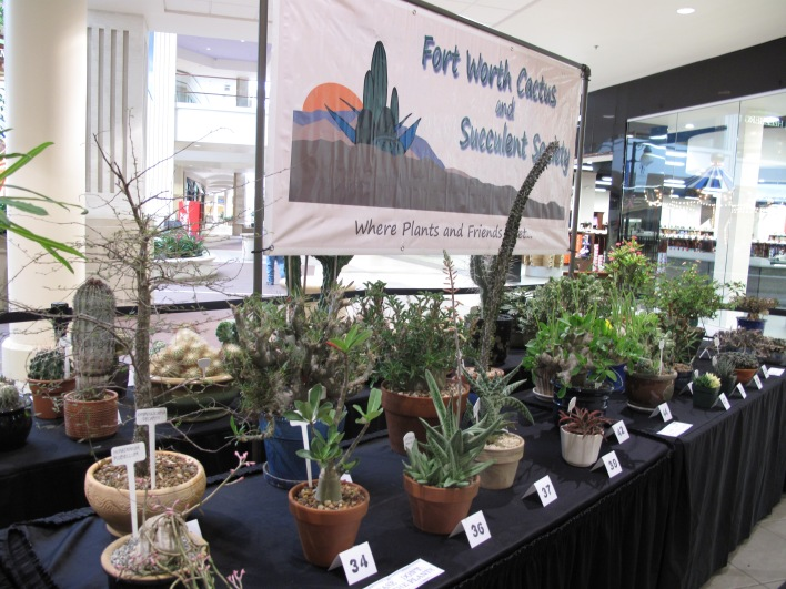 Annual Plant Shows